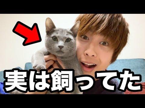 謎の猫について、いいかげん紹介します。