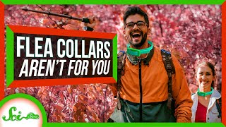 why-can-t-i-wear-my-dog-s-flea-and-tick-collars