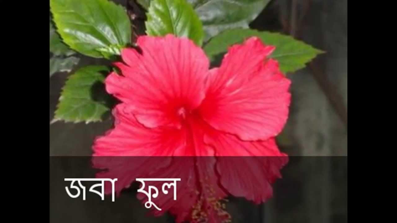 six bengal name of six bengal name of the flower youtube izmirmasajfo Choice Image