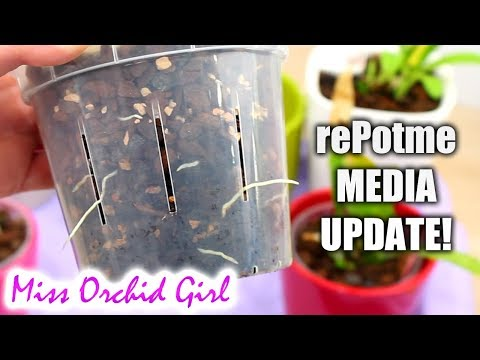 rePotme Orchid media update - Are the Orchids growing well?