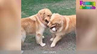 Bets Funny Animals ♥Funniest Dogs Ever   Most Funny Puppies Compilation 2019♥  Love of Pets