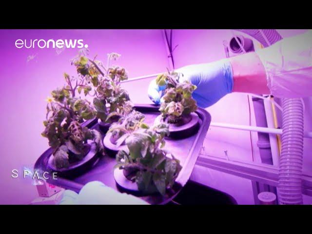 ESA Euronews: Growing food in space