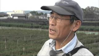 2015年11月放送 「JA京都やましろ合併20周年・宇治茶の伝統 本簀栽培」 ...