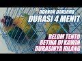 Tips Rawatan Edisi Lb Durasi Panjang Setelah Di Kawin Ngekek Panjang  Menit  Mp3 - Mp4 Download