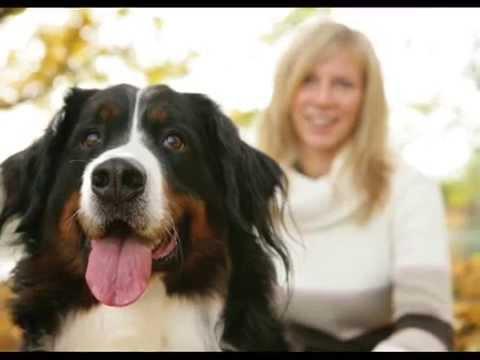 хилс корм для собак купить, корм бош для собак отзывы - YouTube