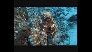 Los últimos Paraísos - Barreras de Coral [Documental Completo]