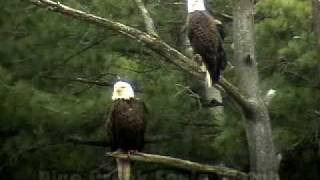Pine Creek Eagle Watch