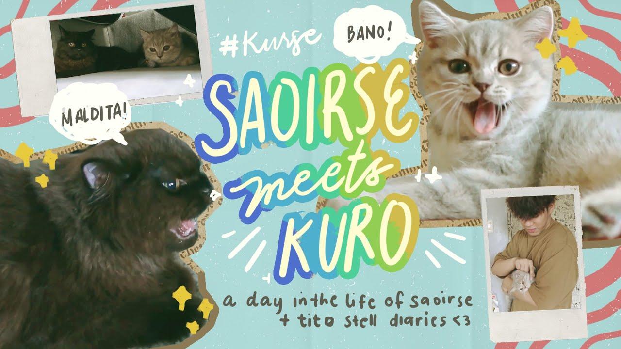 saoirse meets kuro | cat meet up
