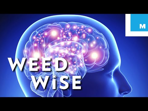 Is It Possible To Overdose on Cannabis? - Weedwise