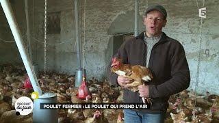 Poulet fermier : le poulet qui prend l'air