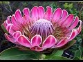 Top 25 Most Beautiful Flowers in the World
