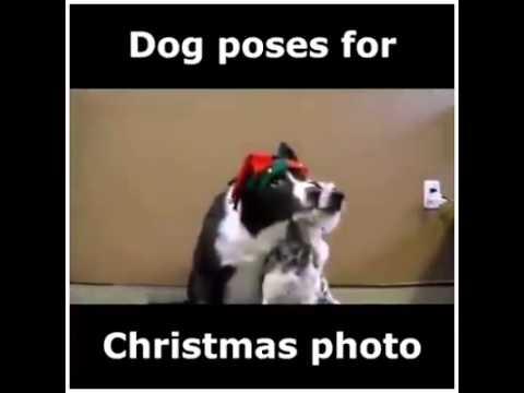 Dog poses for christmas photo