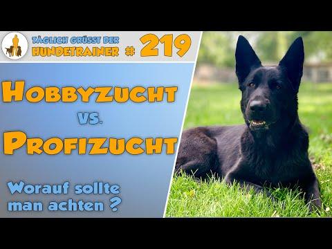 "TGH 219:  Hobbyzüchter vs Profizucht - was ist ""besser""? - Hundetraining Hundeschule Stadtfelle"