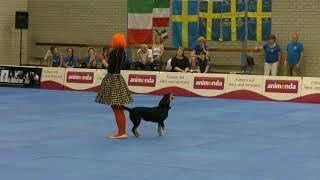 Dogdance World Championship. Freestyle. Alexandra Komarova and entlebucher sennenhund Shkoda.