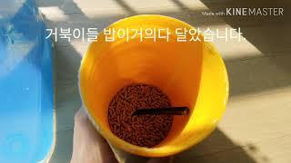#10 거북이수조가 깨끗한날 feat.구독자128명
