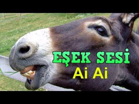 Eşek sesi, Sıpa Sesi, Eşek anırması   donkey sound, donkey voice