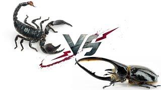 Императорский Скорпион VS Жук-Нептун