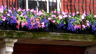 Pretty Flowers Window Boxes.