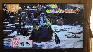 【けものフレンズ】グレープくんがめざましテレビに登場!