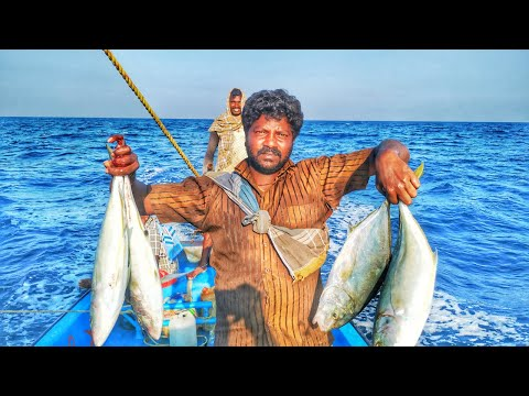 Handline Fishing //bludger Fish Catching Videos