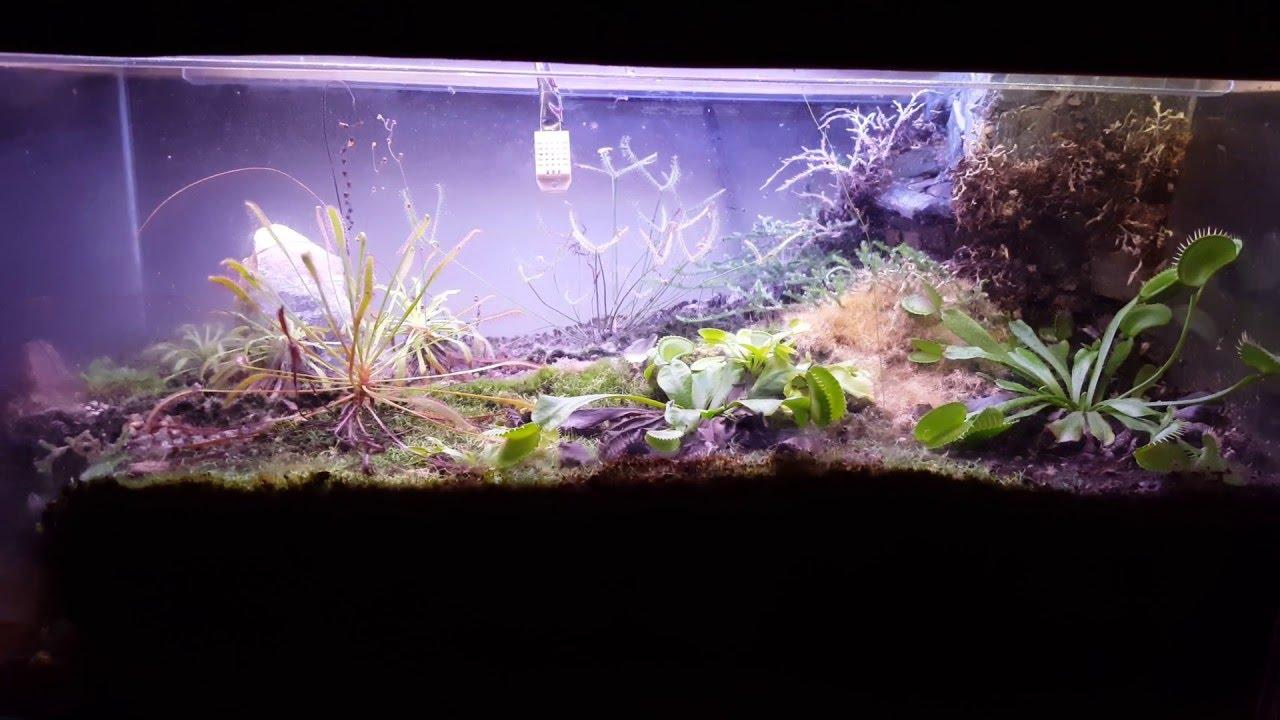 Terrario plantas carnivoras despues de 1 a os y medio - Plantas para terrarios ...