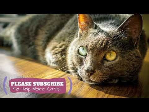2 Hours Soothing Music For Cats, Instant Feline Relaxation Music - Makes Cats Go to Sleep ☯LCZ86
