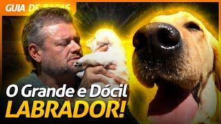 LABRADOR RETRIEVER, O GRANDÃO BRINCALHÃO! | RICHARD RASMUSSEN
