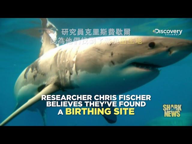 鯊魚週30週年特輯 Shark News : 鯊魚出生地
