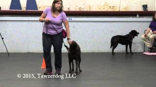 Reliability for Reactive Dogs with Control Unleashed® Exercises - Emma Parsons