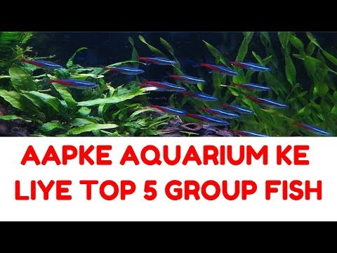 TOP 5 GROUP AQUARIUM FISH FOR YOUR AQUARIUM IN HINDI