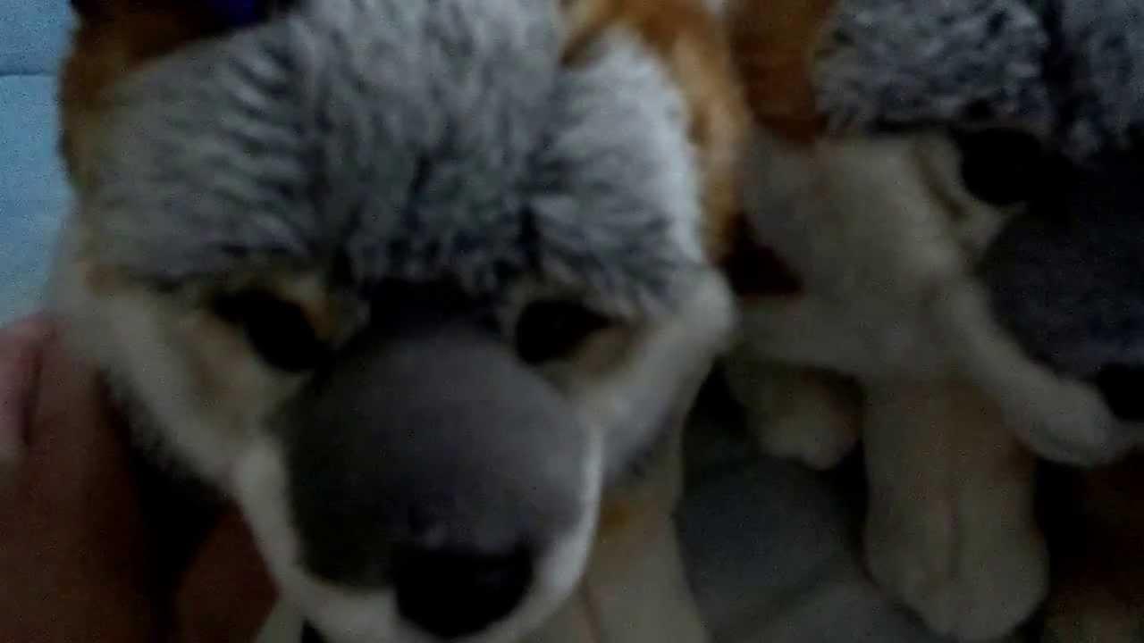 Full Fox Plush Collection 2013 Youtube