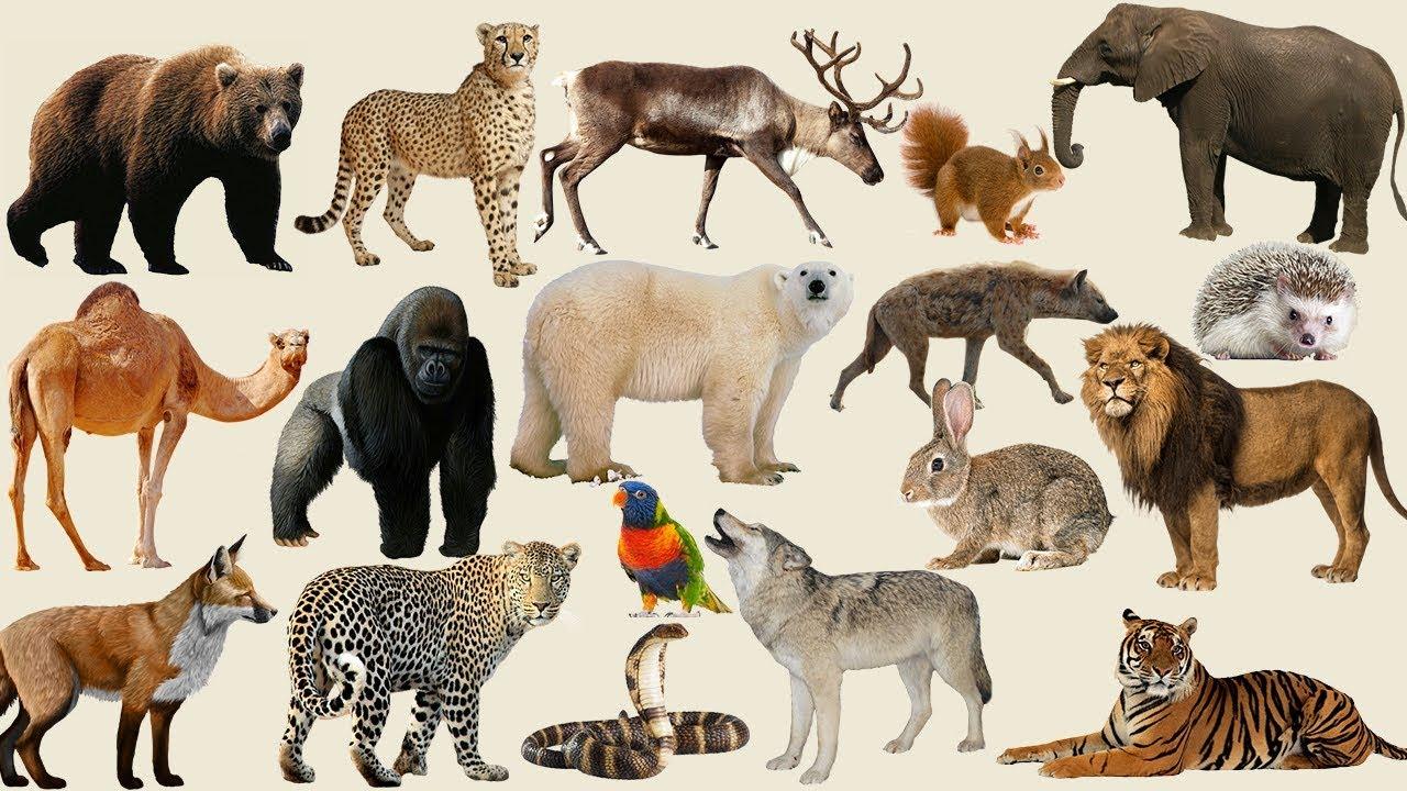 Картинки всех диких и домашних сих