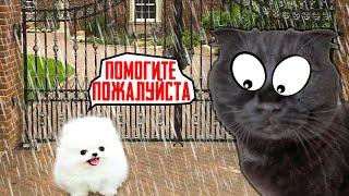 Кошки СПАСЛИ Маленького ЩЕНКА