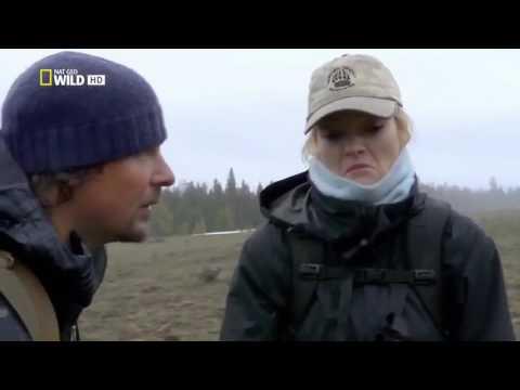 NATGEO Animals   America The Wild Yellowstone Scavengers   Nat Geo WILD
