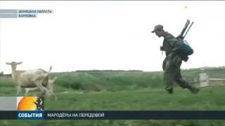 Мародёры орудуют в зоне боевых действий