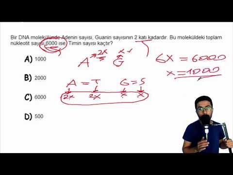 Dna ve Genetik Kod (soru çözümü) - 8.sınıf (LGS)