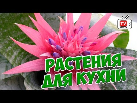 Купон на скидку цветы россии