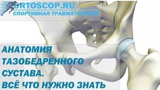 видео Строение человека мышцы и суставы