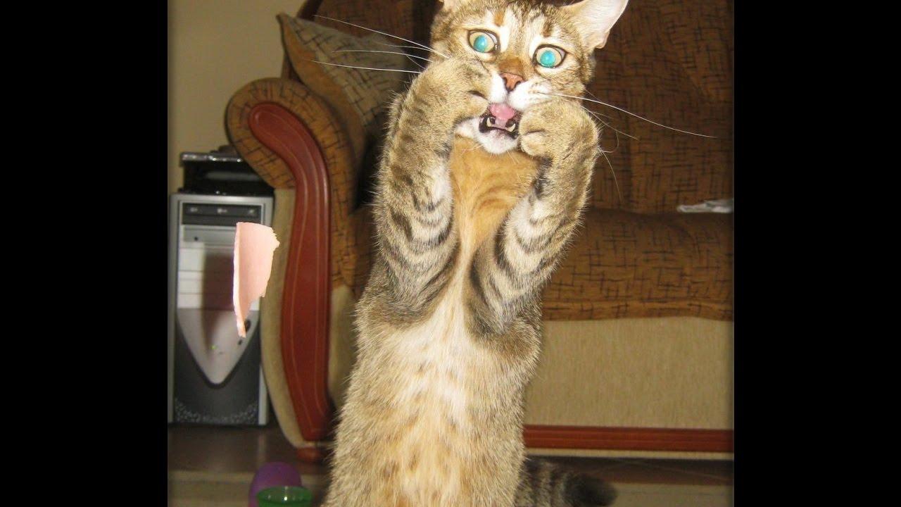 Открытки, приколы про кошек самые смешные до слез в картинках