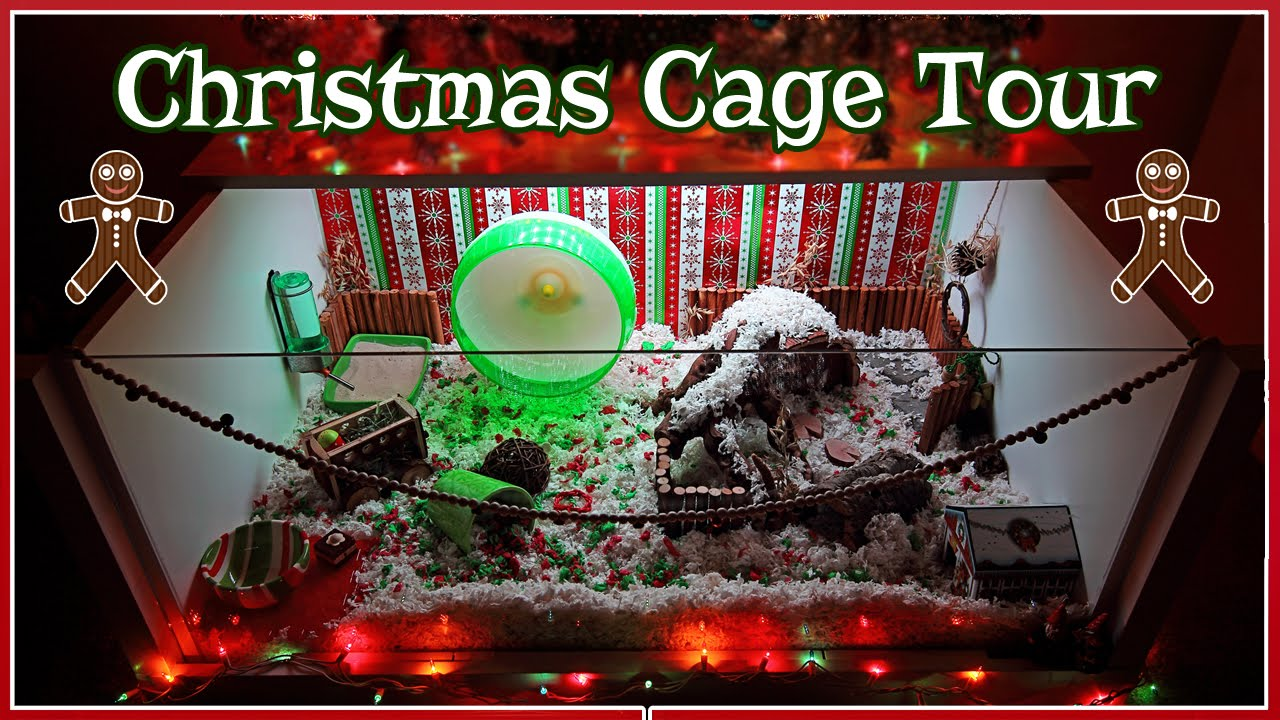 Carob S Christmas Hamster Cage Tour 2015 Youtube