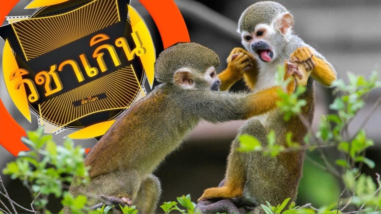 สารคดี วิชาเกินสัตว์โลก [season3] ep.19 ลิงกระรอกท่องอวกาศ #ลองกระรอก