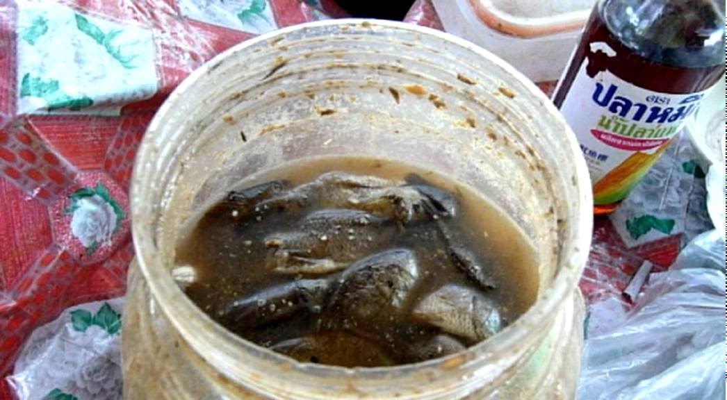 Padek or fermented fish sauce youtube for Fermented fish sauce