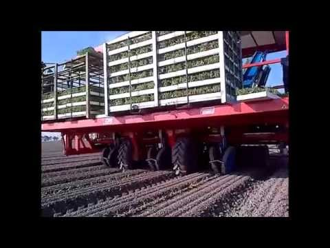 AUTOMATED TOMATO TRANSPLANTER - FERRARI SELF-PROPELLED