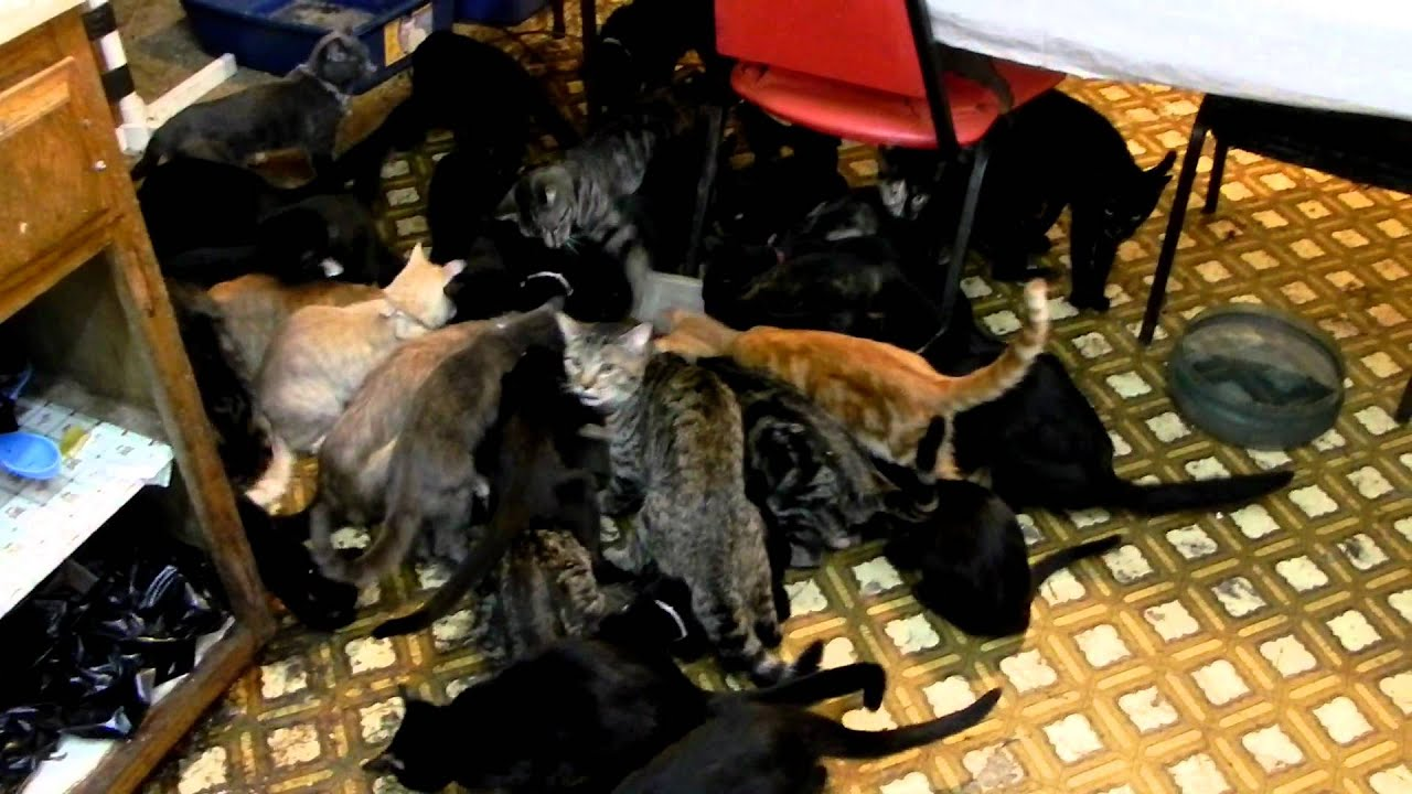 Cats Like Clutter