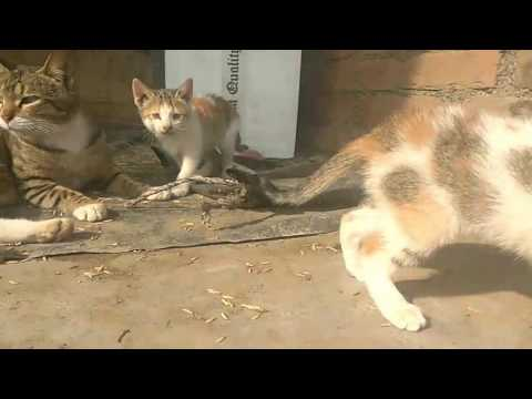 Indian Kittens are crying :(