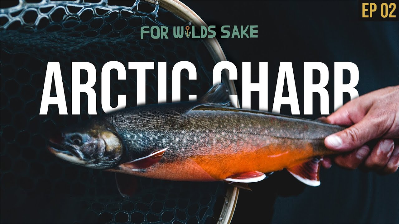 THE QUEST TO CATCH MAINE'S RAREST FISH    For Wild's Sake: The Rare Trout Chronicles   Episode 2