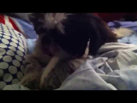 How to clean dogs teeth Bones the best