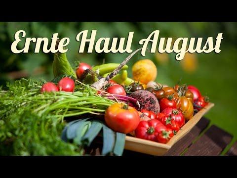 sommer- -ernte-haul-im-august- -selbstversorgung