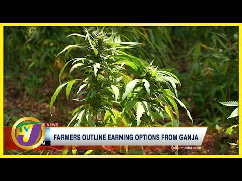 Jamaican Farmer Outline Earning Options from Ganja   TVJ News - July 13 2021