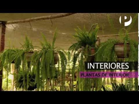 Interiores decoraci n con plantas youtube for Decoracion interiores